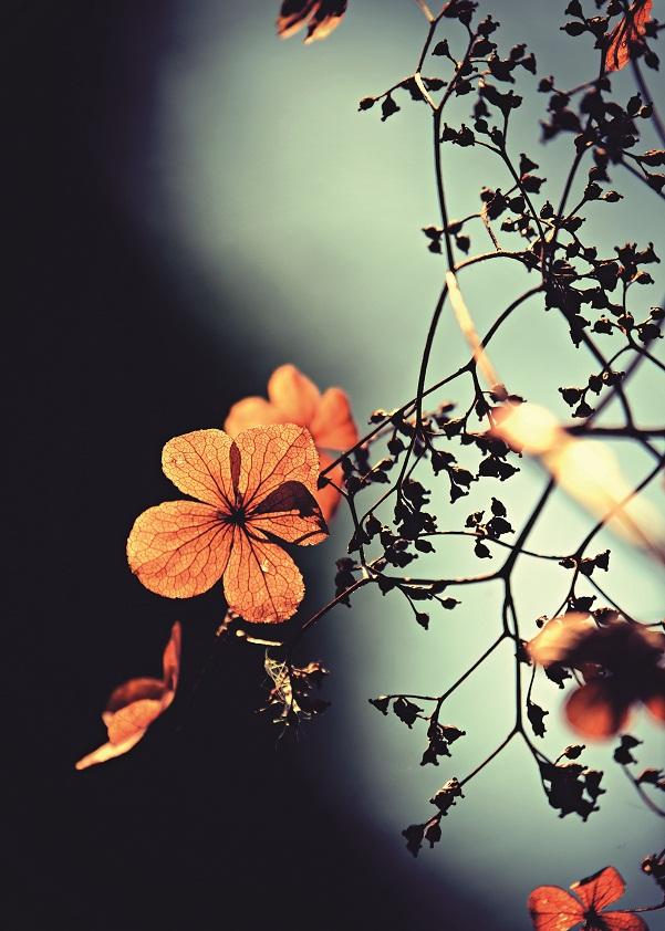 Borító – Szeptember virágai